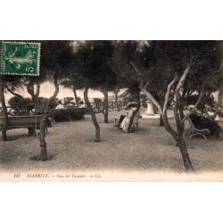 Biarritz sous les tamaris