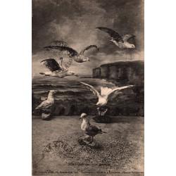 Ault onival vol d'oiseaux